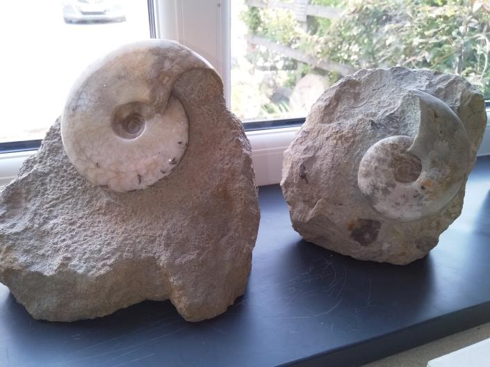 Large fossil ammonite stones