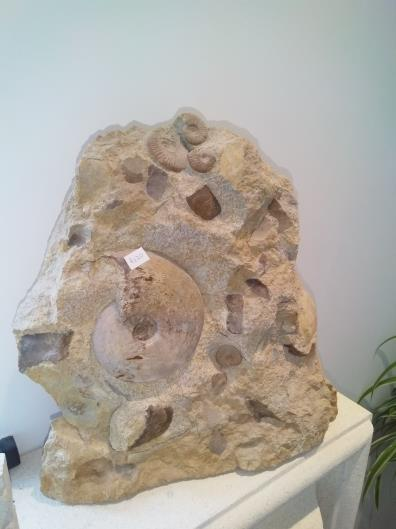 Large stone full of fossils